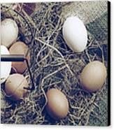 Eggs Canvas Print by Joana Kruse