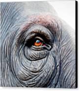 Elephant Eye Canvas Print by Selvin