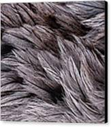 Emu Feathers Canvas Print by Hakon Soreide