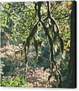 Epiphytic Moss Canvas Print by Doug Allan