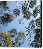 Eucalyptus Canvas Print by Carlos Caetano