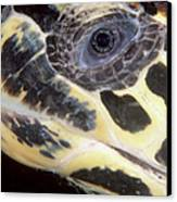 Extreme Close-up Of The Head Canvas Print by Beverly Factor