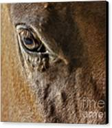 Eye Of The Horse Canvas Print by Susan Candelario