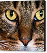 Face Framed Feline Canvas Print by Art Dingo