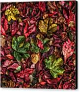 Fall Autumn Leaves Canvas Print by John Farnan