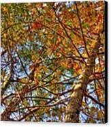 Fall Canopy Canvas Print by Barry Jones