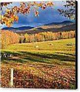 Fall Colours, Cows In Field And Mont Canvas Print by Yves Marcoux