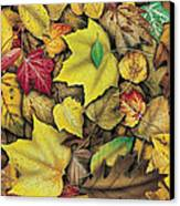 Fall Leaf Study Canvas Print by JQ Licensing