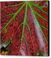 Fall On The Vine Canvas Print by Kim Hymes