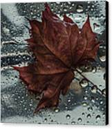 Fallen Leaf Canvas Print by Vladimir Kholostykh