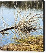 Fallen Tree Canvas Print by Douglas Barnard