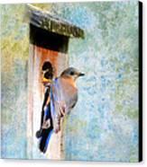 Female Eastern Bluebird At Nesting Box Canvas Print by Jai Johnson