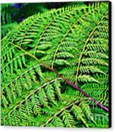 Fern Frond Canvas Print by Kaye Menner