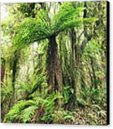 Fern Tree Canvas Print by MotHaiBaPhoto Prints