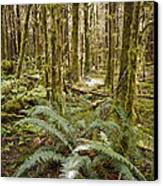 Ferns Sit On The Forest Floor Canvas Print by Taylor S. Kennedy