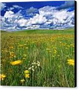 Field Of Flowers, Grasslands National Canvas Print by Robert Postma