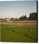 Field With Irrigation Pipes Canvas Print by David Buffington