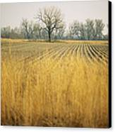 Fields At The Lillian Annette Rowe Bird Canvas Print by Joel Sartore