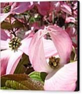 Fine Art Prints Pink Dogwood Flowers Canvas Print by Baslee Troutman
