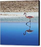 Flamingo Canvas Print by MaCnuel