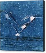 Flock  Canvas Print by Debra  Miller