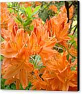 Floral Art Prints Orange Rhodies Flowers Canvas Print by Baslee Troutman