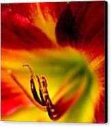 Floral Macro Of A Blossom Canvas Print by Floyd Menezes