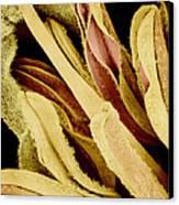 Flower Reproductive Parts, Sem Canvas Print by Susumu Nishinaga