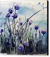 Flowering Chives Canvas Print by Stephanie Aarons