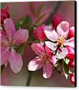 Flowering Crabapple Detail Canvas Print by Mark J Seefeldt