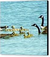 Follow The Leader Canvas Print by Karen Wiles