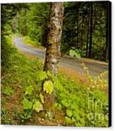 Forest Escape Canvas Print by Idaho Scenic Images Linda Lantzy