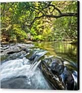 Forest Jewel Canvas Print by Debra and Dave Vanderlaan