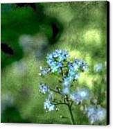 Forget-me-not Grunge Canvas Print by Darren Fisher