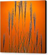 Fountain Grass In Orange Canvas Print by Steve Gadomski