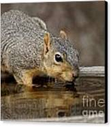 Fox Squirrel Canvas Print by Lori Tordsen