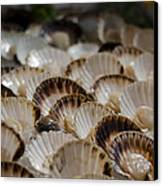 Fresh From The Sea Canvas Print by Heather Applegate