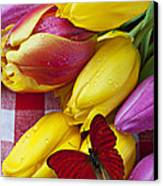 Fresh Tulips And Red Butterfly Canvas Print by Garry Gay
