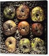 Frozen Apples Canvas Print by Bernard Jaubert