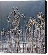 Frozen Reeds At The Shore Of A Lake Canvas Print by John Short