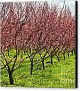 Fruit Orchard Canvas Print by Elena Elisseeva