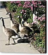Garden Geese Parade Canvas Print by Susan Herber