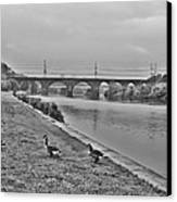 Geese Along The Schuylkill River Canvas Print by Bill Cannon