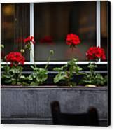 Geranium Flower Box Canvas Print by Doug Sturgess