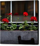 Geranium Flower Box Canvas Print by Doug Sturgess