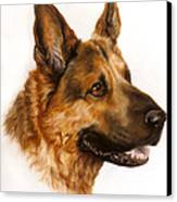 German Sheppard Canvas Print by Patricia Ivy