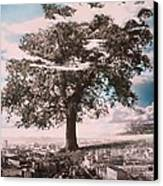 Giant Tree In City Canvas Print by Hag