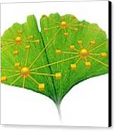 Ginkgo And Network Diagram Canvas Print by Pasieka