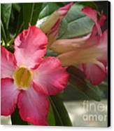 Glimmer Of Pink Canvas Print by Sharon Wood