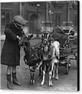 Goat Cart Canvas Print by Fox Photos